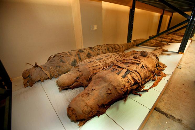Наюге Египта отыскали мумию 4-метрового крокодила